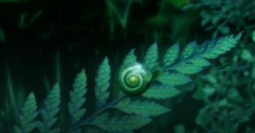 Snail on a Fern