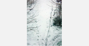 traces-at-snow, photo